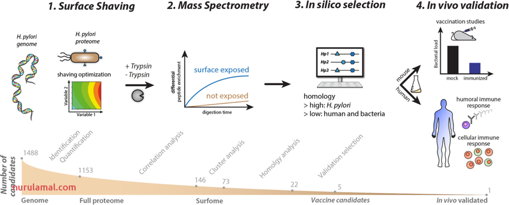 A Mass Spectrometry Guided Approach for the Identification