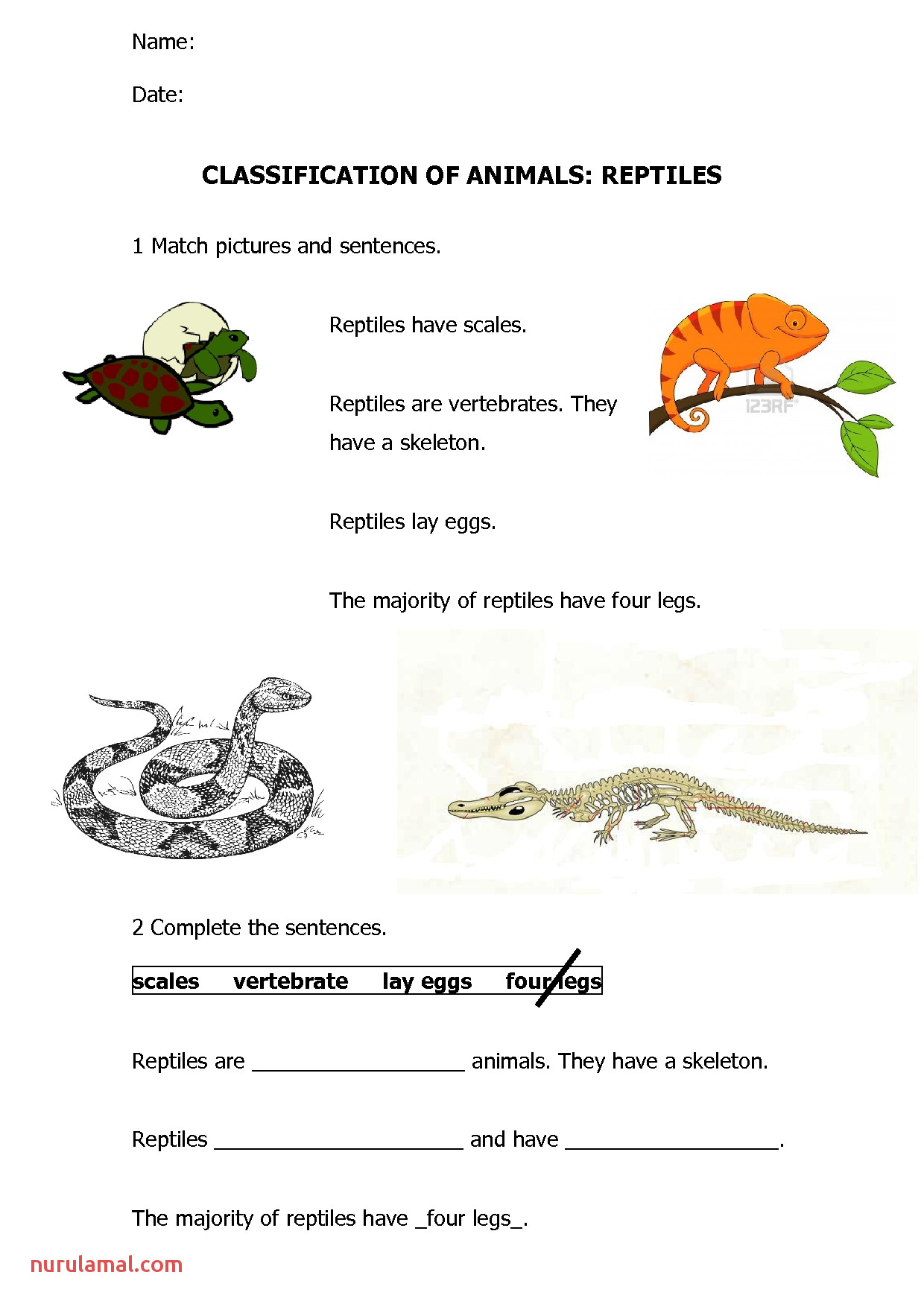 Animals Reptiles and Amphibians Worksheet for Kindergarten