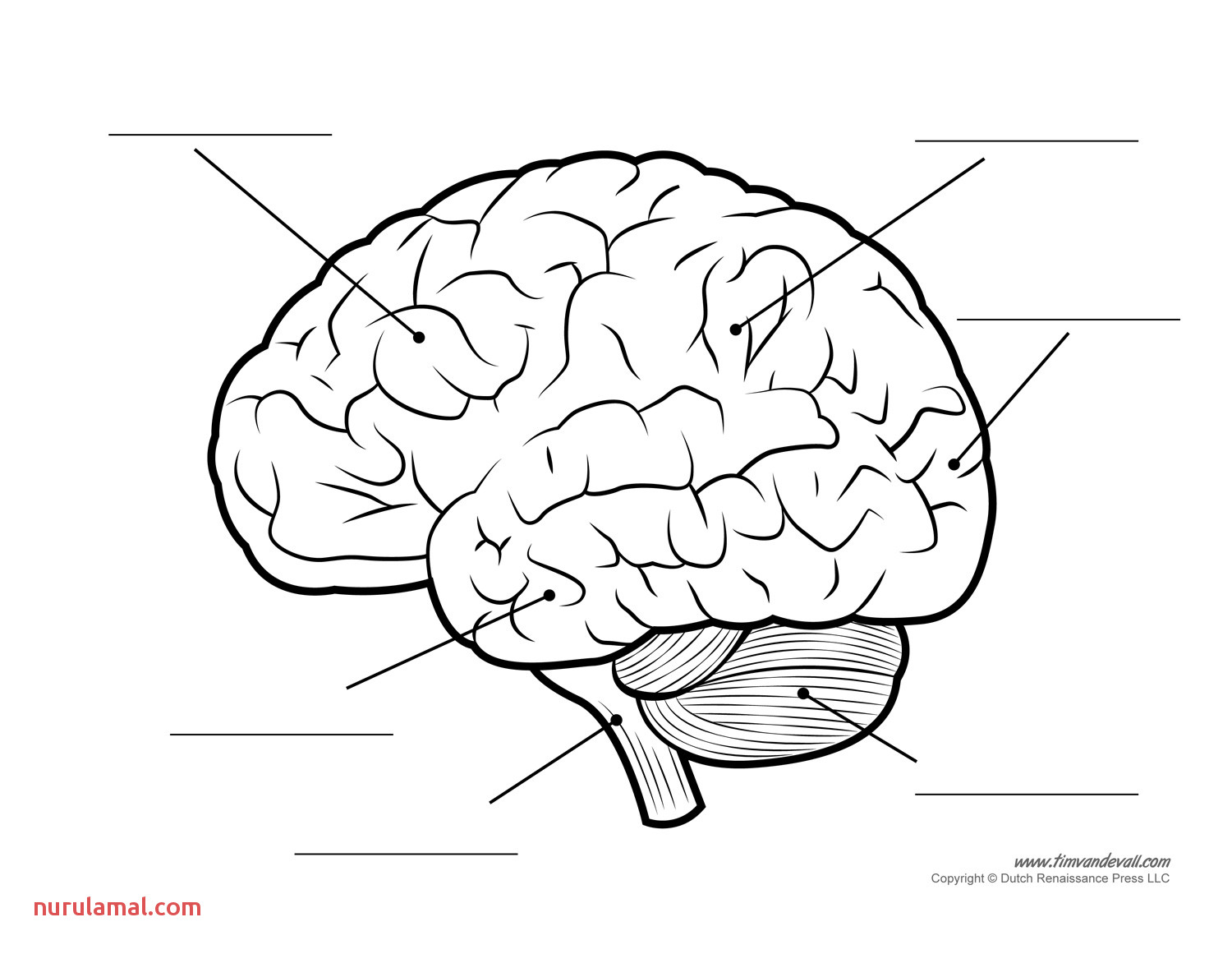 Brain Template Printable that are Crafty