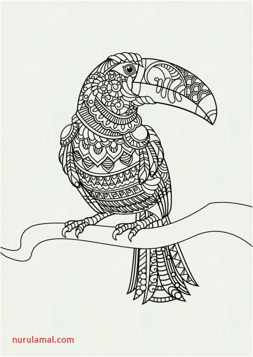 coloring sheets kids pictures coloring sheets for kids inspirational parrot colouring pages fresh of coloring sheets kids