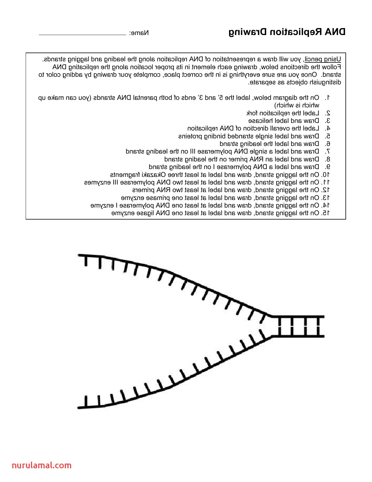 Dna the Double Helix Coloring Worksheet Colored Cool