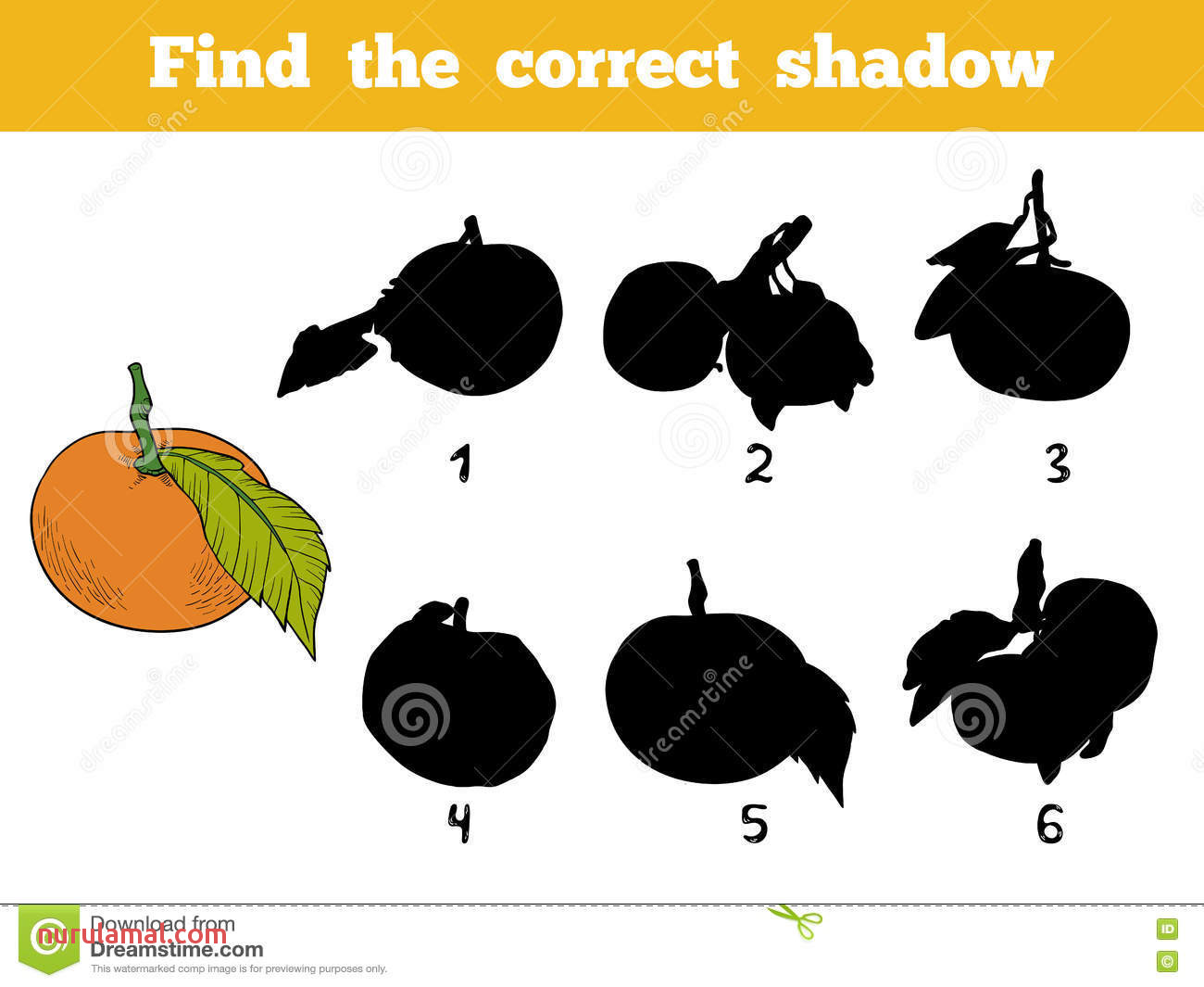 Find the Correct Shadow Vector Color Set orange Fruits