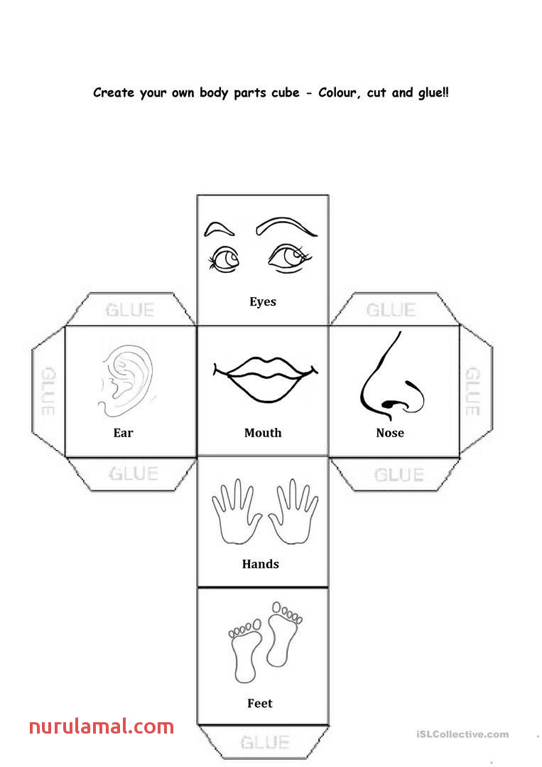 Free Printable Body Parts orksheets for Kindergarten Kids