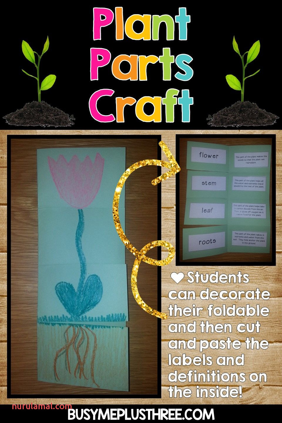 Plant Life Cycle Worksheets Observation Journal Crafty