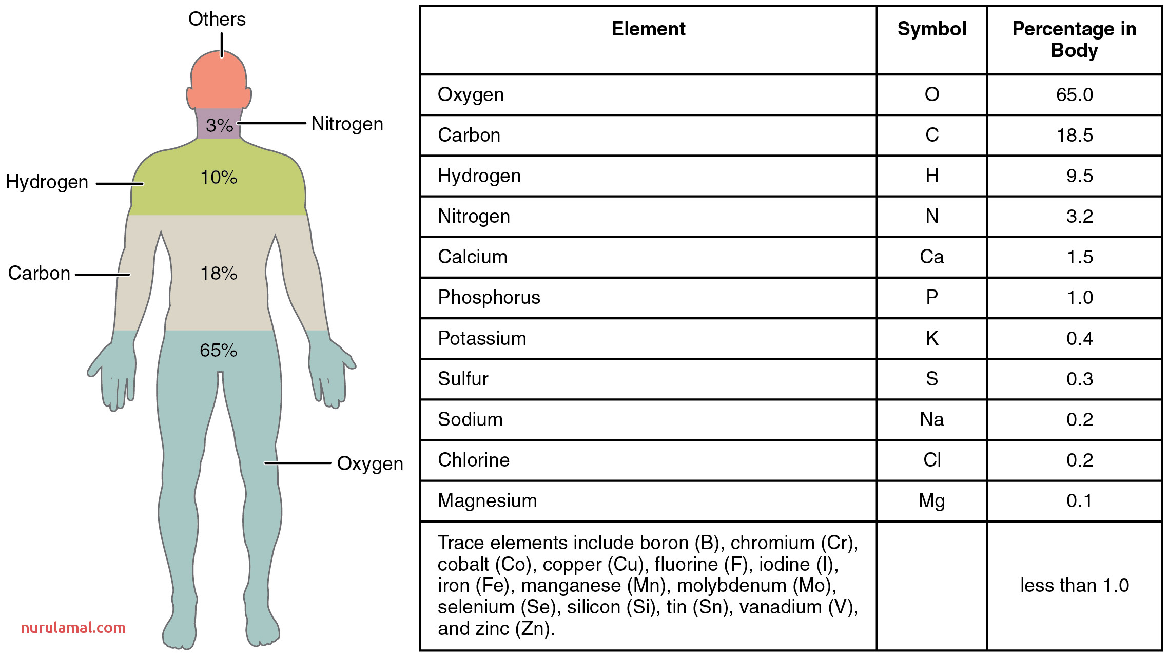 Quotes About Body Chemistry 53 Quotes