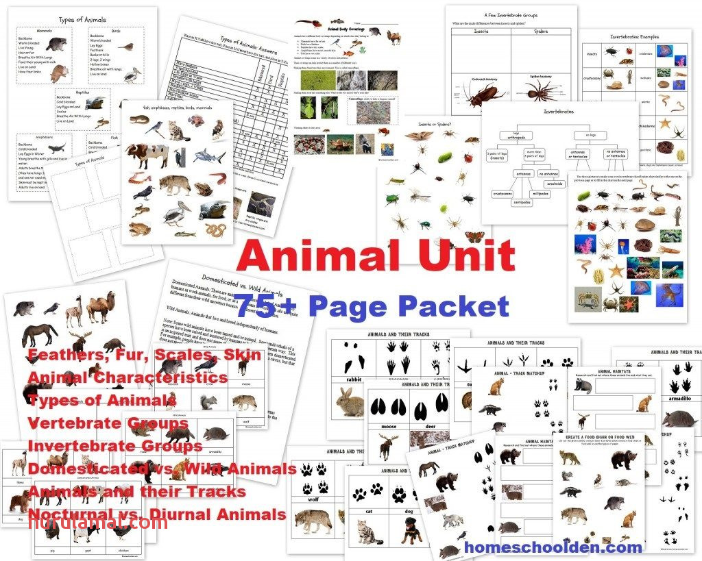 Animal Unit 75 pages worksheets feathers fur scales skin vertebrates invertebrates insects spiders 1024x819