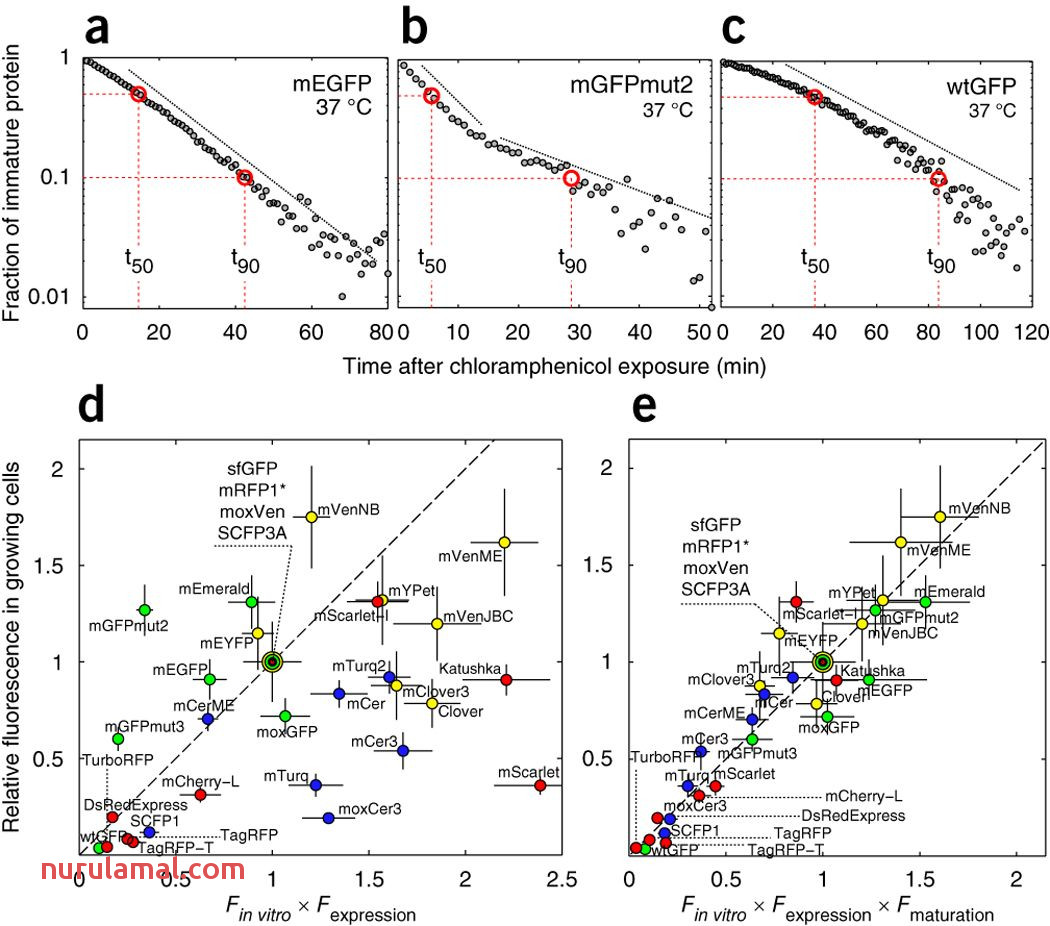 Systematic Characterization Of Maturation Time Of
