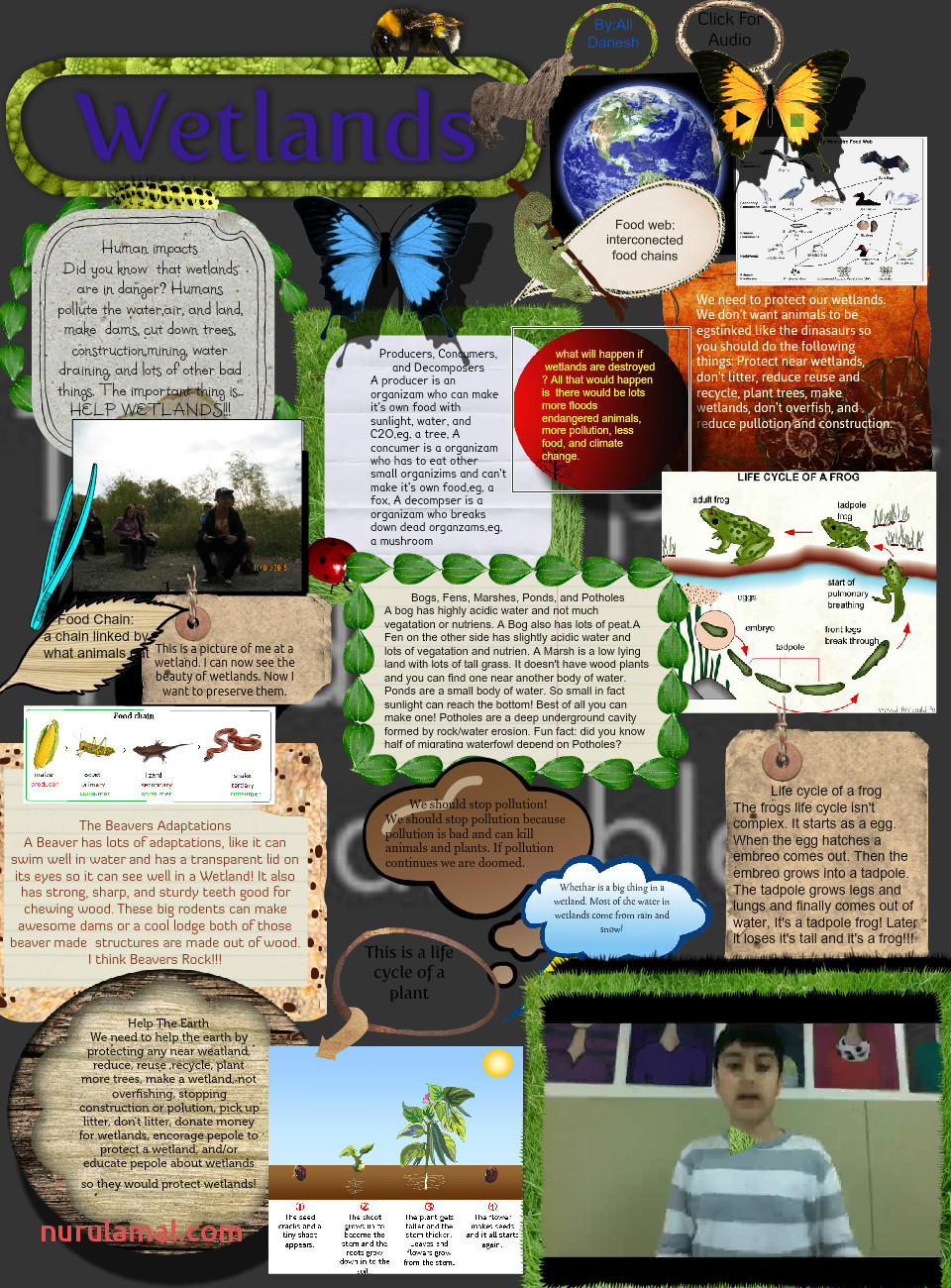 Wetlands Scavengers In Wetland Food Web Diagram Worksheet
