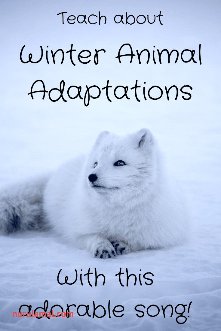 Winter Animal Adaptations song